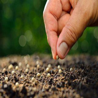 Actitudes Para Cultivar y Fortalecer la Vida de fe